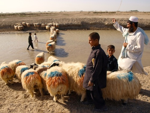 A shepherd and his family walk their sheep in Zaranj, capital of Afghanistan's Nimroz Province. In the absence of comprehensive census data, the Baloch intellectual Abdul Sattar Purdely tells IPS that Afghan Balochs number about two million, though not all speak the Balochi language. Credit: Karlos Zurutuza/IPS