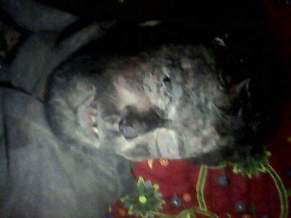 Martrys of Mehi Mutilated bodies 30 June 2015 7